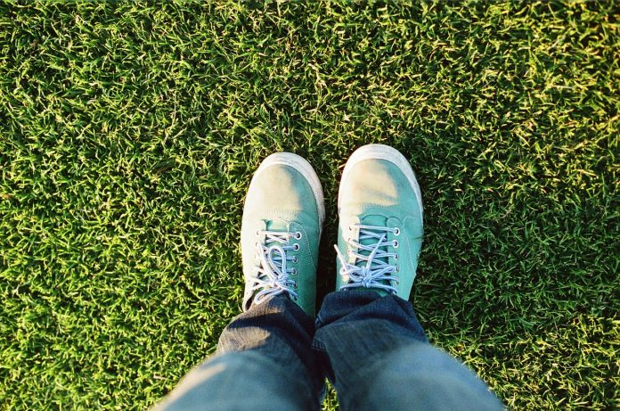 Lawn from scratch: important tips